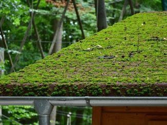 trop de mousse sur un toit